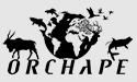 Orchape